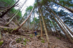 2010-Salita-nel-bosco